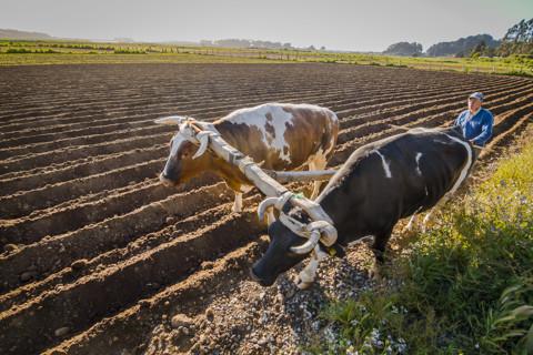 Agricultura, vinos, campo